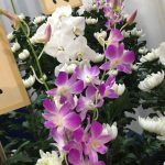 供花とお香典は両方とも出すべきか?